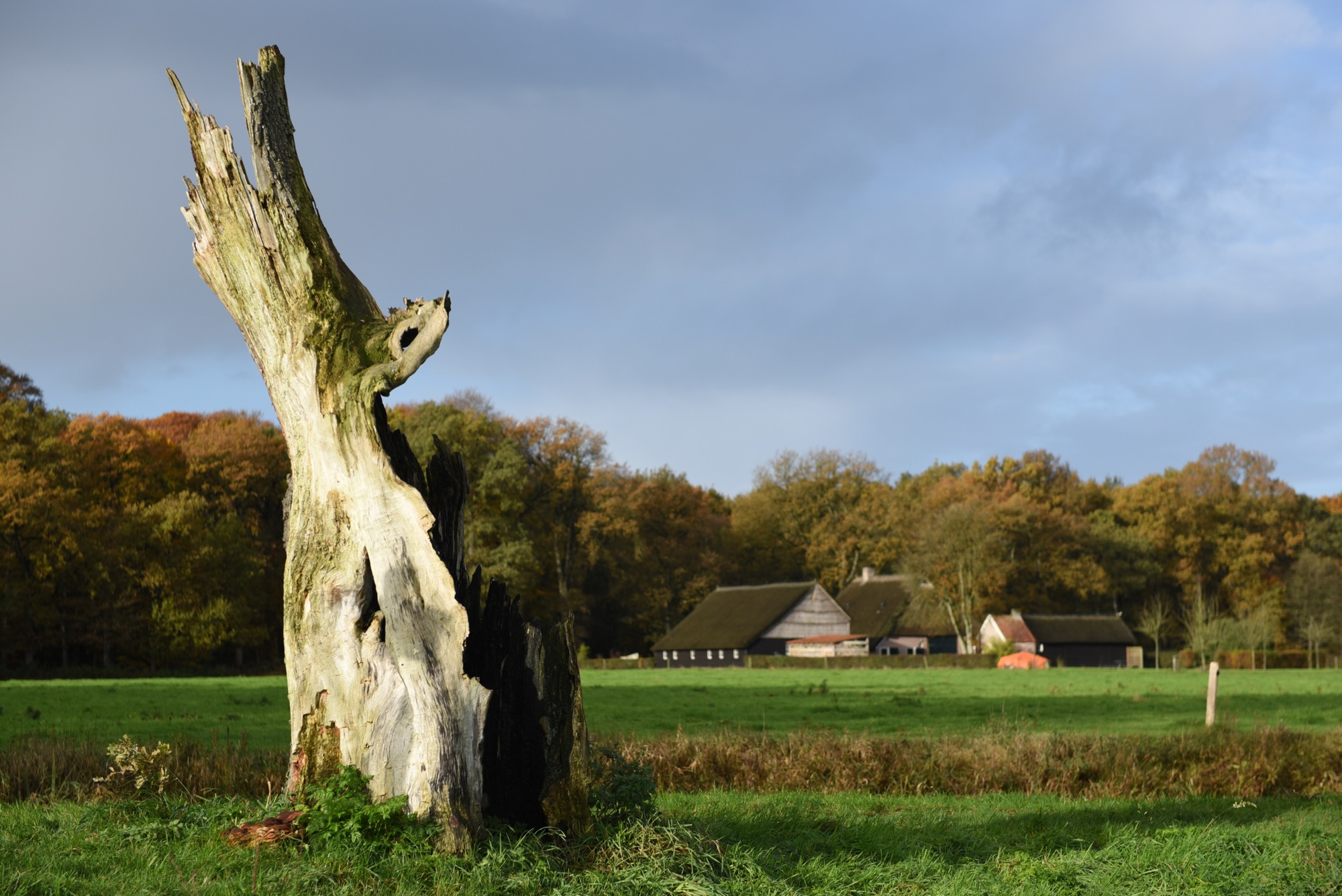 Toorn van Thunaer: het tolhuis bij de locatie met scherpe boomstronk